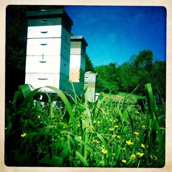 honey yard